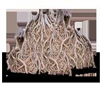 wurzelwerk-staemme-stubben